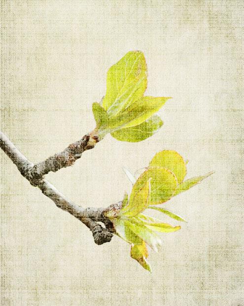 Spring_6758-3