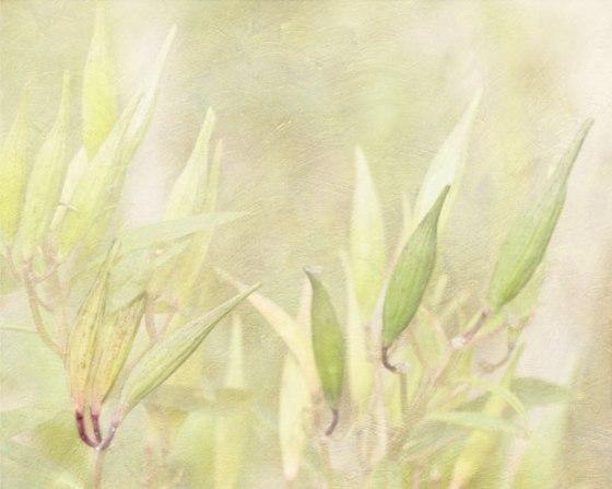 weeds_2656