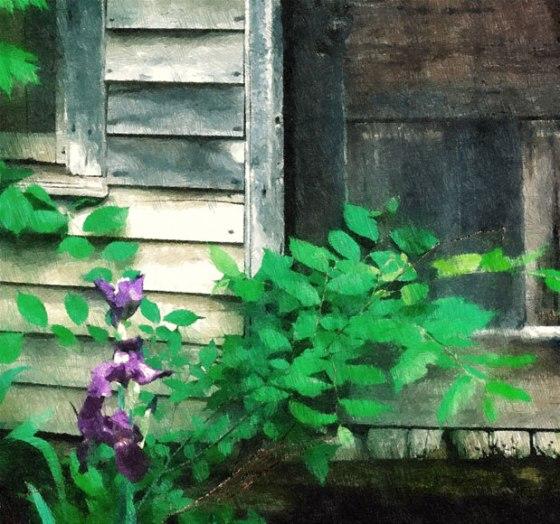 FotoSketcher---Iris-and-old-door-cr-OP-200-10-39-140-50-OPS-def-FP0