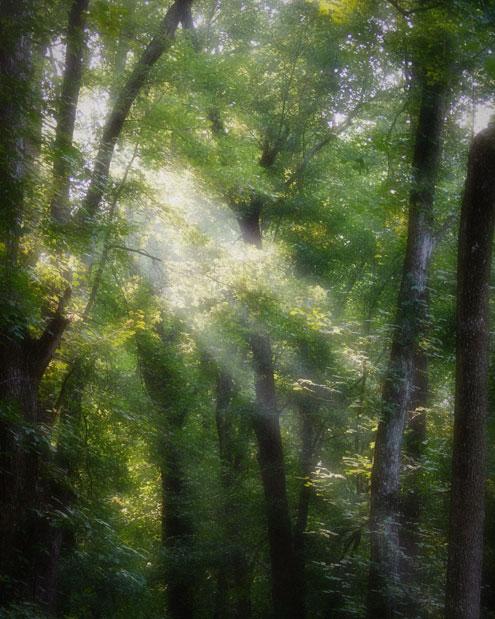 Light in the forest. Muscatatuck National WildlifeRefuge.
