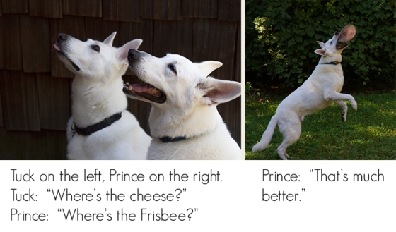 Prince-and-Tuck-9905_9859