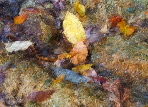 Autumn on the compostheap