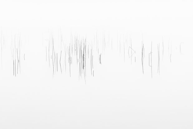 Reeds, reflections, mist