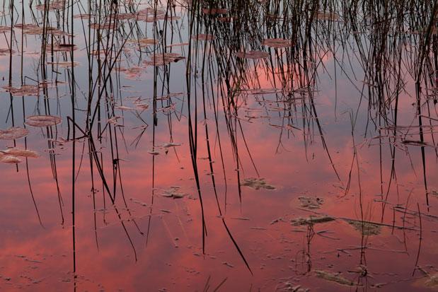 Evening reflection