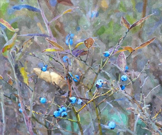 FotoSketcher---Blueberries-2-WC-def-CI-69