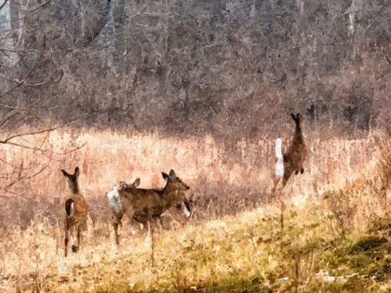 FotoSketcher---Deer_2559-OP