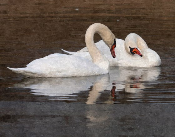 FotoSketcher---swans_2384-OP-def