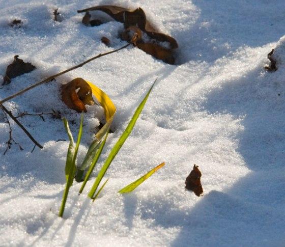grass_in_winter_4089_2