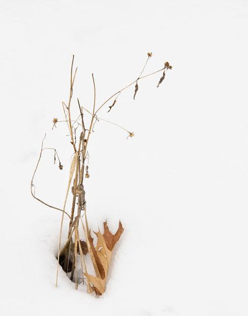 weeds_6794