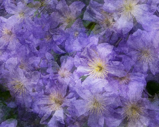 flowers_4208_cropped-Edit-Edit