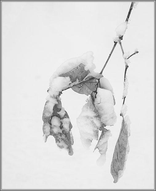 snow-4704-Edit-Edit_2