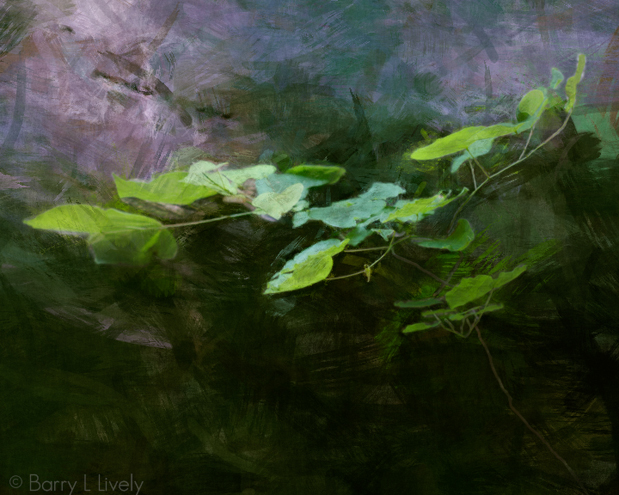 Leaves in a dream