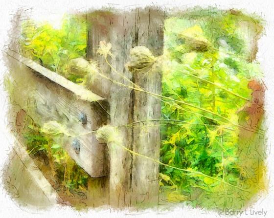 untitled-0910_DAP_Watercolor