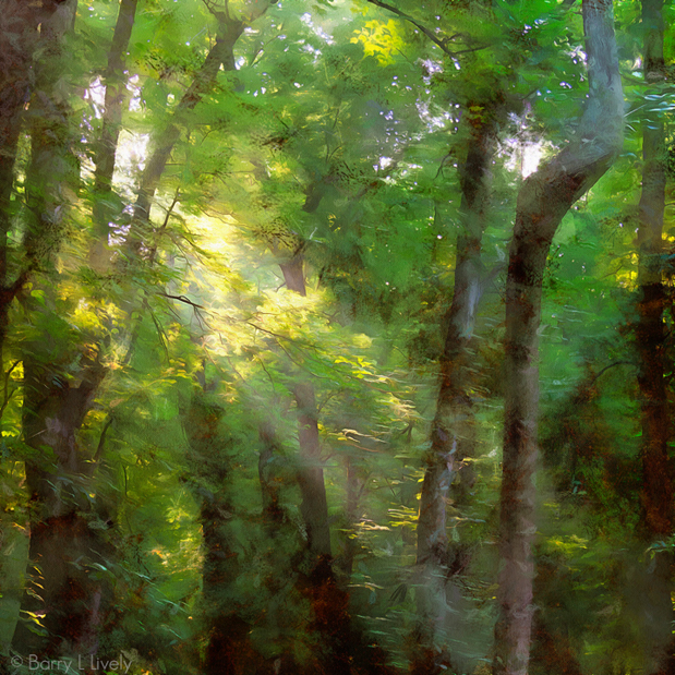 Light in theforest