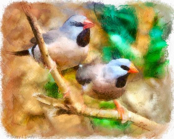 WVN_7244-Edit-Edit_DAP_Watercolor