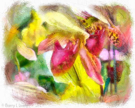 Hilltop_Orchids_6626_2_DAP_Watercolor