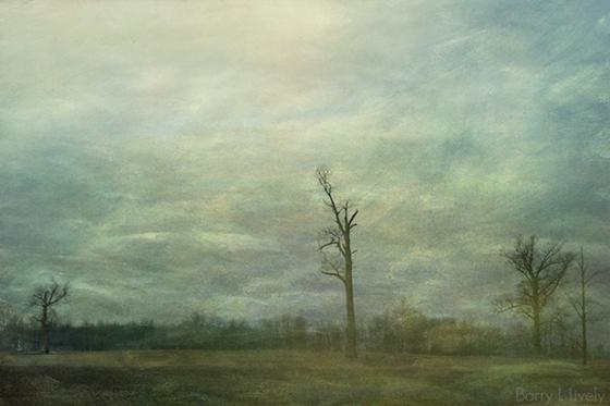 trees_field_3154