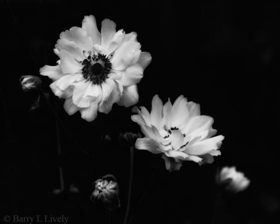 Autumn-3452-010