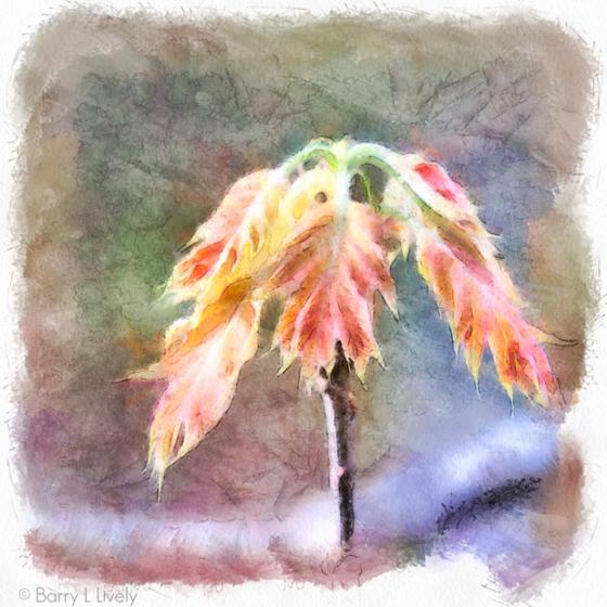 untitled-5721_DAP_Watercolor