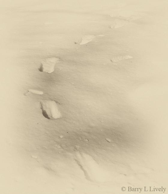 Winter-0028
