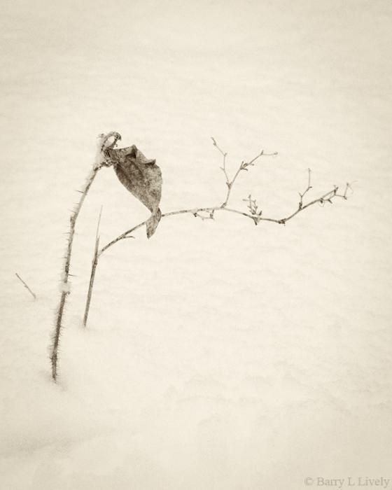 Winter-5500-16