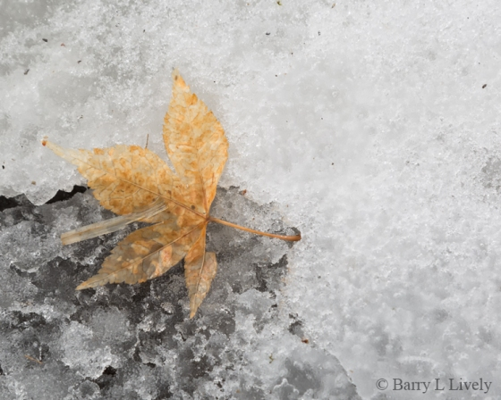 Winter-0274-Edit