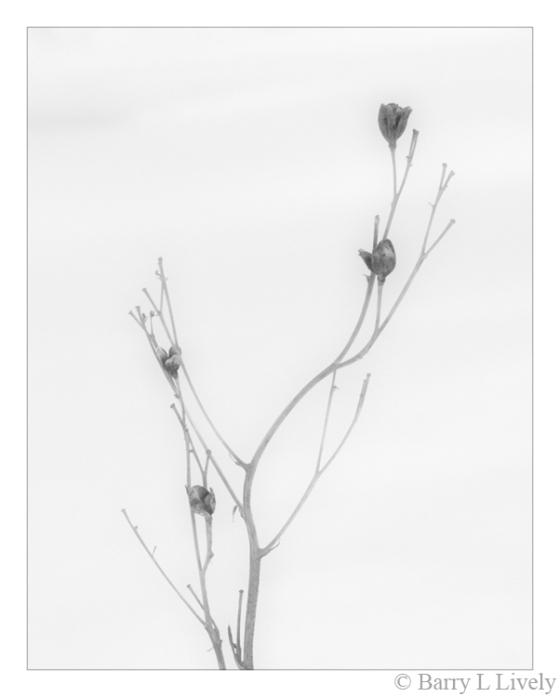 winter_4707