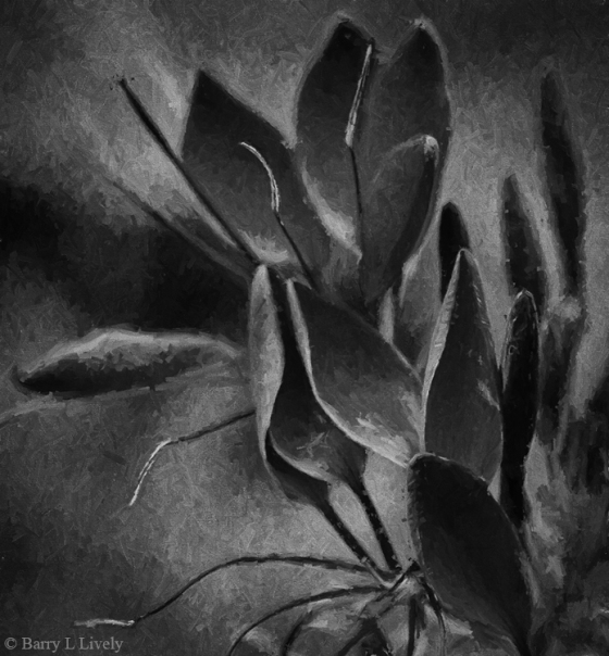 Blossoms_2797-Edit-EdHop1-bw