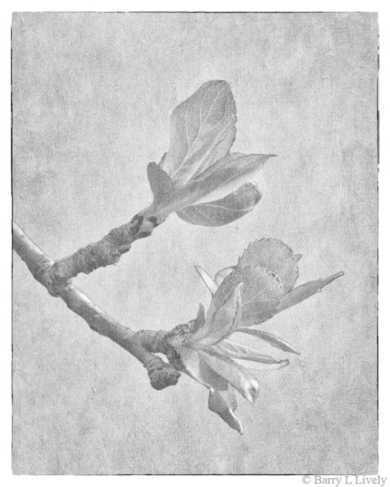 Spring_6758-2-019