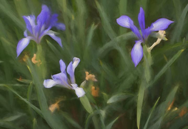 In a Springgarden