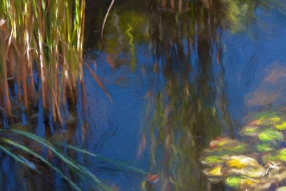 Pond_7369-turnsun2