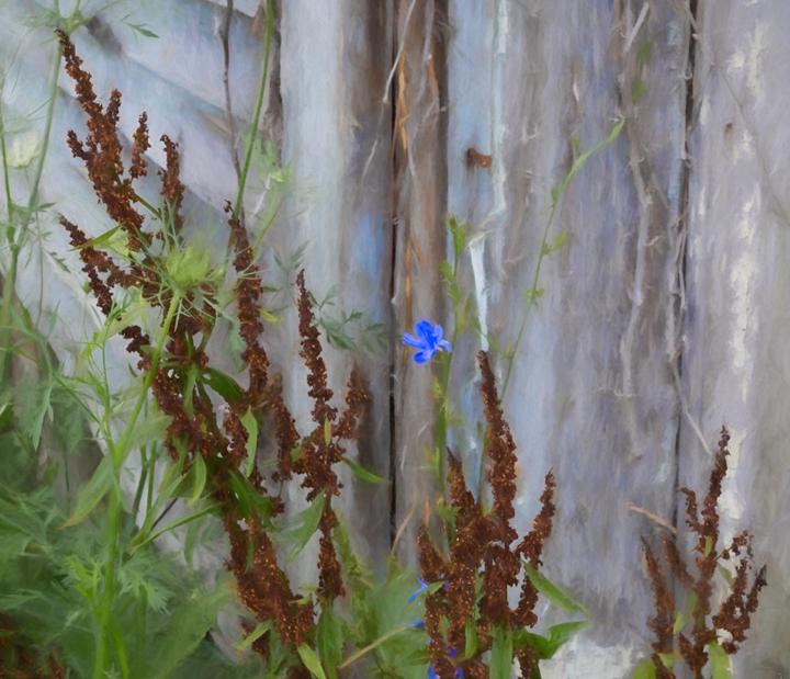 A little blueflower