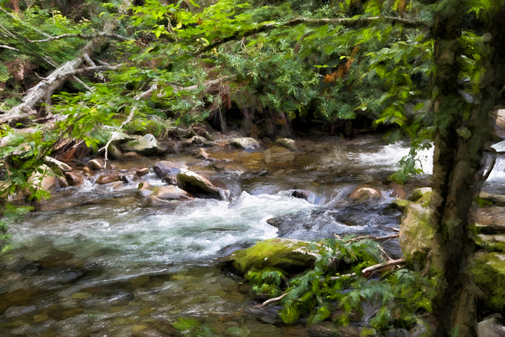 A stream in the Smokies