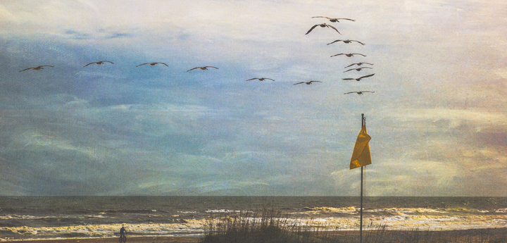 Pelicans and a cautionflag