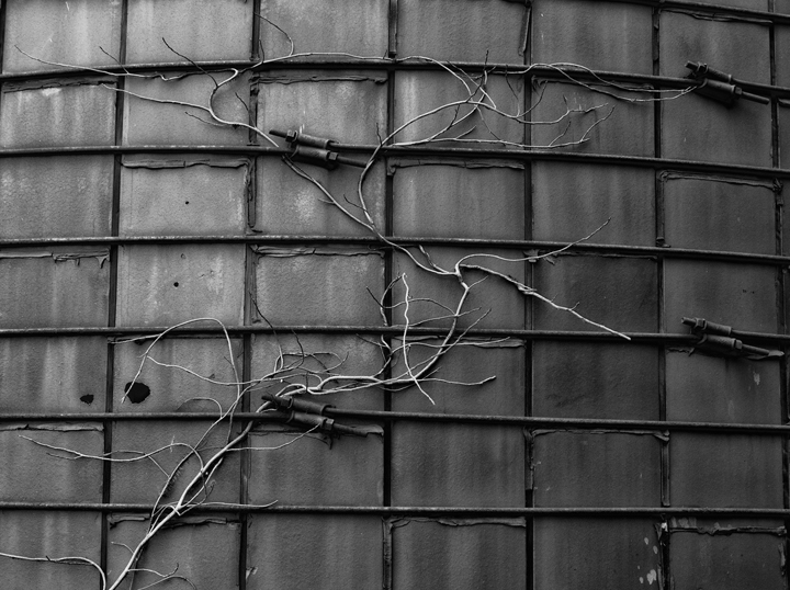 Vine and grain storage bin